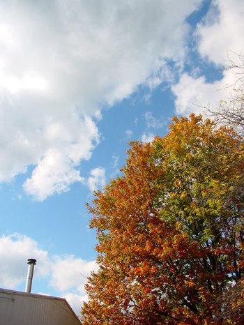 Cloudfallfoliage